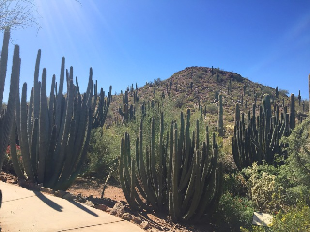 Desert Botanical Gardens, The Next Great Bite